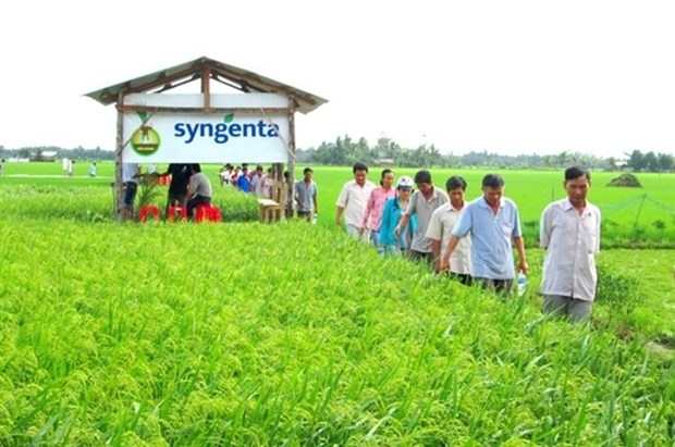 Syngenta ne cesse de soutenir le Vietnam pour un developpement durable de l'agriculture hinh anh 1