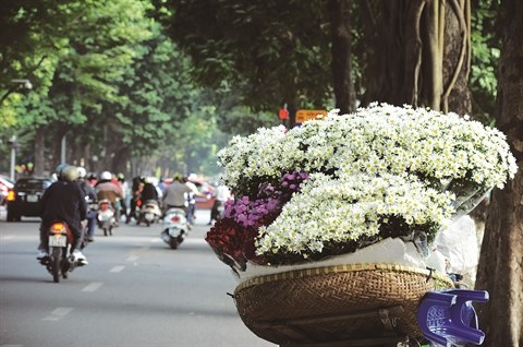 Fleurs des quatre saisons a Hanoi hinh anh 1