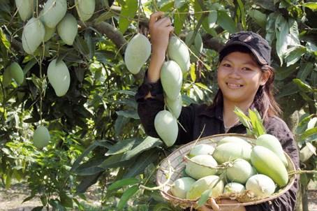 Les Sud – coreens friands de mangue et d'ananas du Vietnam hinh anh 1