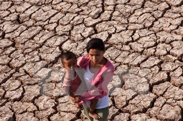 L'adaptation au changement climatique, une urgence pour le delta du Mekong hinh anh 1