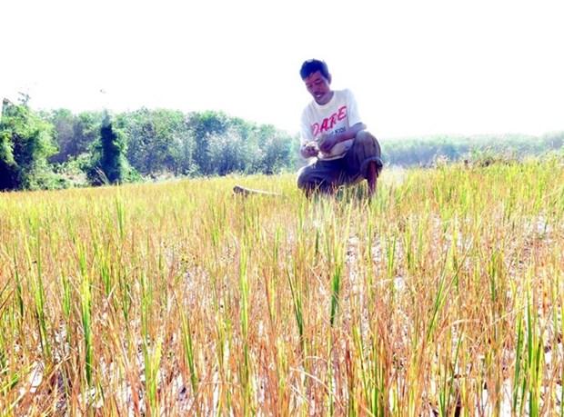 Telegramme sur la lutte contre la secheresse au Tay Nguyen hinh anh 1