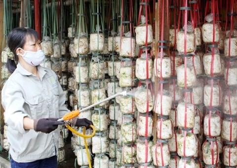 Les pas difficiles de la biotechnologie au Vietnam hinh anh 2