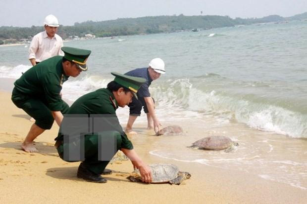 Le Vietnam lance un plan pour la conservation des tortues marines hinh anh 1