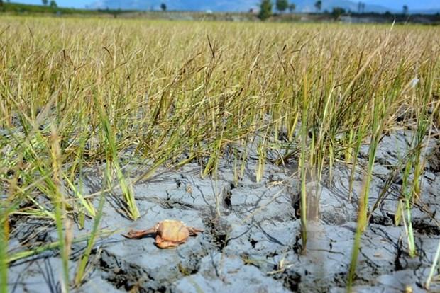 Cooperation Vietnam-Allemagne dans la resilience au changement climatique hinh anh 1