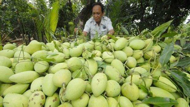 L'Australie s'apprete a ouvrir sa porte aux mangues vietnamiennes hinh anh 1