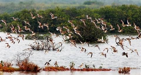 Des solutions pour mieux proteger les parcs nationaux et reserves naturelles hinh anh 1