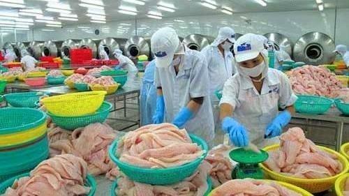 Davantage de producteurs autorises a exporter des poissons tra aux Etats-Unis hinh anh 1