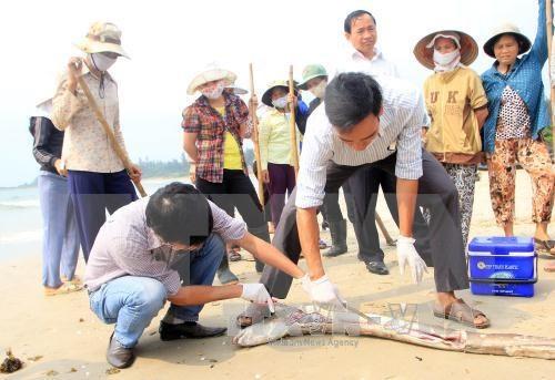 Un vice-PM demande de faire la lumiere sur l'hecatombe de poissons hinh anh 2