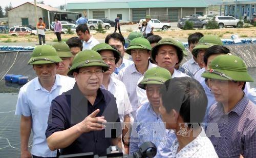 Un vice-PM demande de faire la lumiere sur l'hecatombe de poissons hinh anh 1