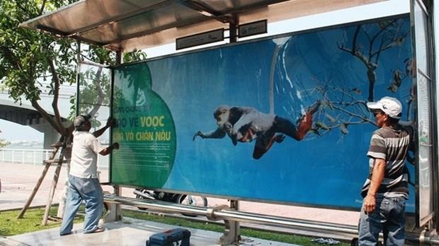 Da Nang : une campagne de protection des doucs sur les abribus hinh anh 1