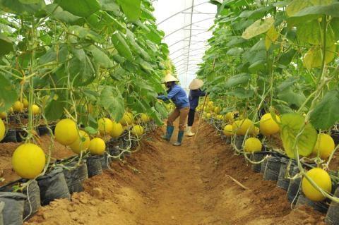 L'Australie partage ses experiences de developpement agricole avec le Vietnam hinh anh 1