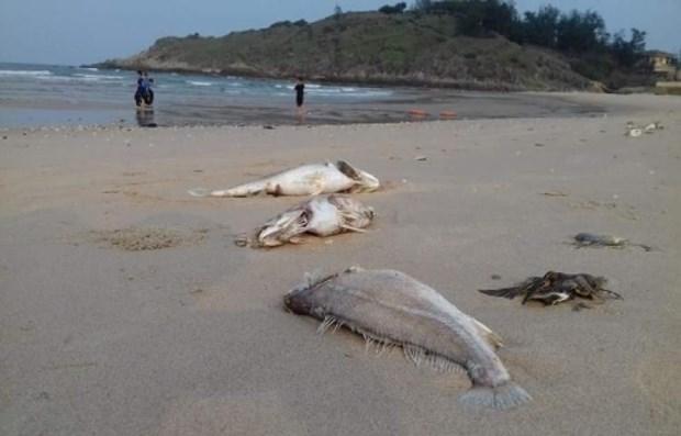 Mort en serie de poissons : le PM demande des sanctions hinh anh 1