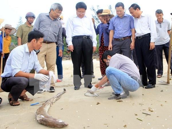 Les recherches s'accelerent pour determiner la cause de l'hecatombe de poissons hinh anh 1