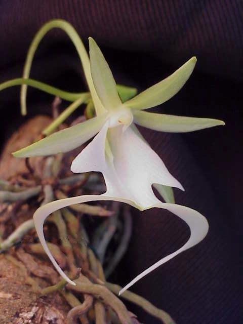 Un chercheur vietnamien multiplie une rare espece d'orchidee hinh anh 2