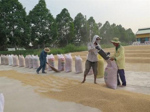 Plus de 1,8 million de tonnes de riz exportees depuis janvier hinh anh 1
