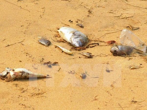 Hecatombe de poissons : la cause identifiee hinh anh 1
