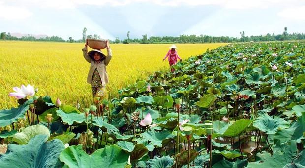 Creation du Centre des biotechnologies de la region de Dong Thap Muoi hinh anh 1