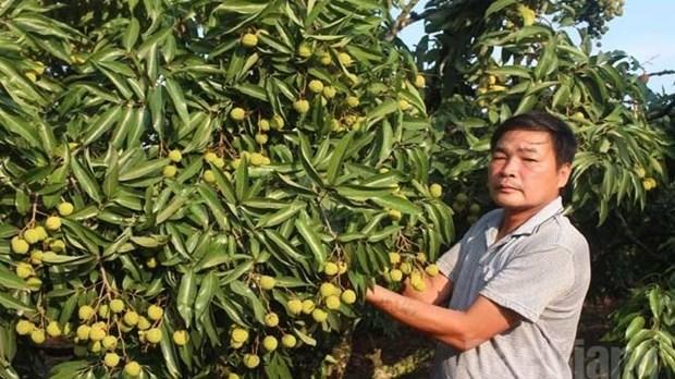 Premier lot de litchis frais vietnamiens exporte aux Etats-Unis en 2016 hinh anh 1