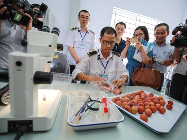 Hanoi: Irradiation de deux tonnes de litchis destinees a l'exportation en Australie hinh anh 1