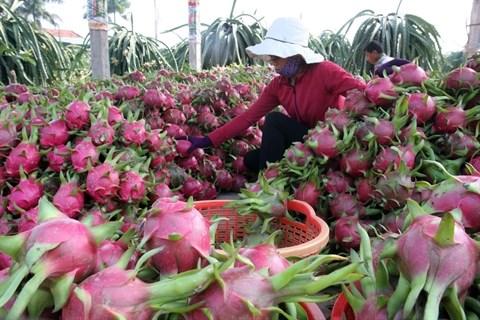 Les exportations vietnamiennes de fruits et legumes poursuivent sur leur lancee hinh anh 1
