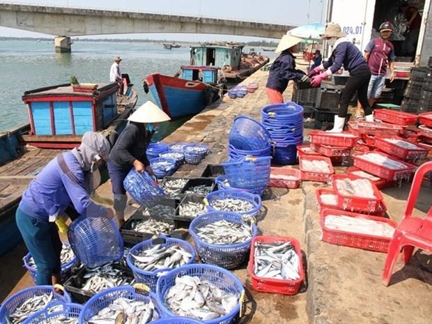 L'assistance opportune aux personnes touchees par l'hecatombe de poissons hinh anh 1