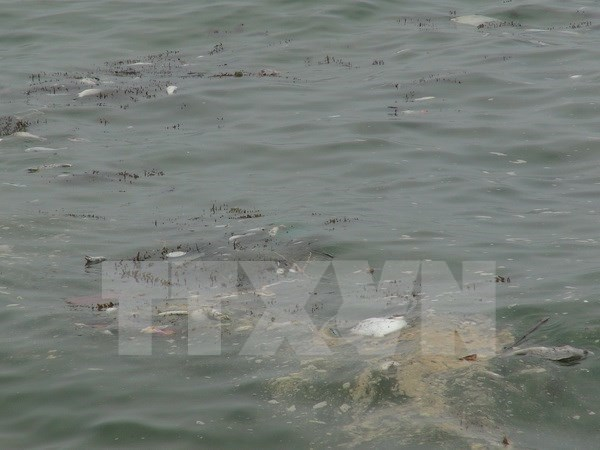 Hecatombe de poissons : poursuite du soutien des pecheurs hinh anh 2