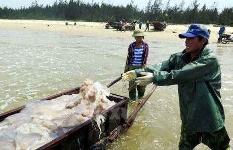Un gigantesque plan d'aide de 263.000 travailleurs affectes par l'hecatombe de poissons hinh anh 1