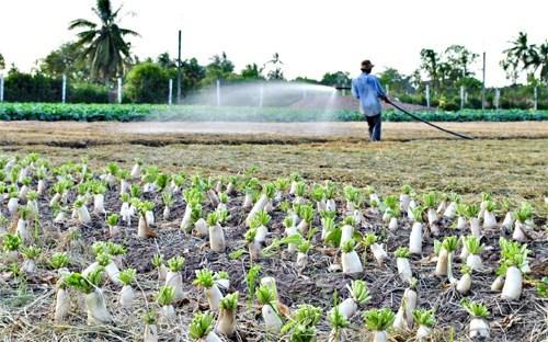 927 milliards de dongs mobilises pour le bien-etre social dans le Delta du Mekong hinh anh 1