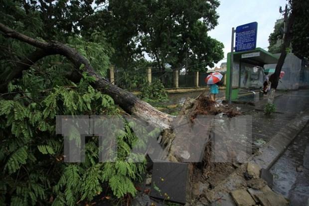 Le typhon Mirinae fait un mort et plusieurs blesses dans des localites du Nord hinh anh 1