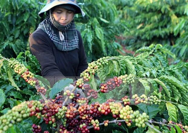 Le Festival de cafe se deroulera en decembre hinh anh 1