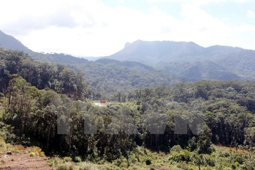 Aide de la JICA pour le developpement de la Reserve mondiale de biosphere de Lang Biang hinh anh 1