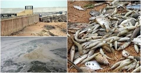 Environnement : Formosa sous surveillance speciale pendant trois ans hinh anh 1