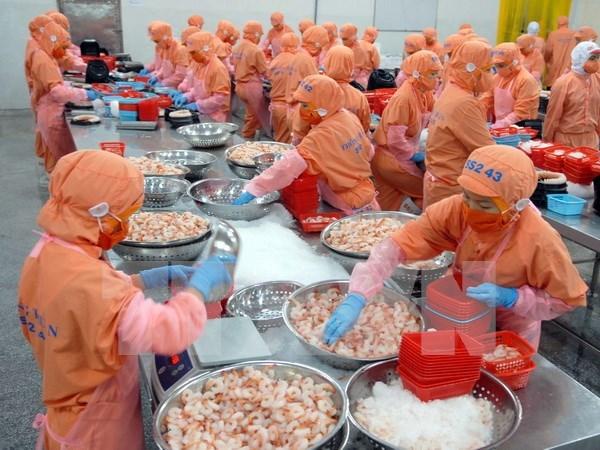 Augmentation possible des exportations de crevettes cette annee hinh anh 1