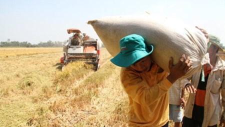 Le revenu percapita en zone rurale aura double dans 5 ans hinh anh 1