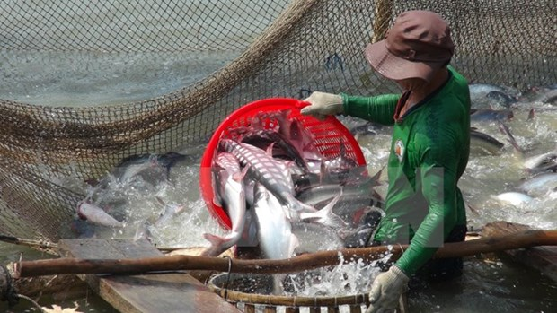 Les infrastructures des zones pangasicoles sont appreciees par le WWF hinh anh 2