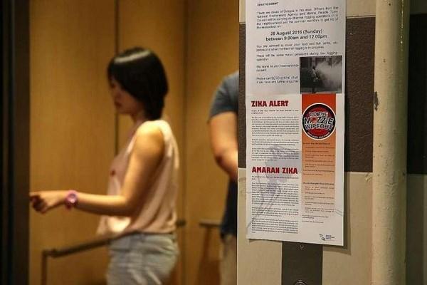Singapour annonce 40 nouveaux cas d'infection au virus Zika hinh anh 1