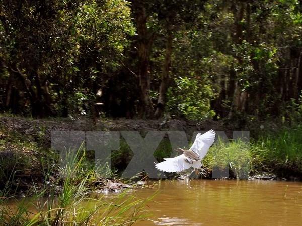 Pres de 400 milliards de dongs pour conserver le Parc national d'U Minh Ha hinh anh 2
