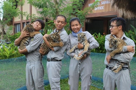 Quatre petits tigres voient le jour sur l'ile de Phu Quoc hinh anh 1