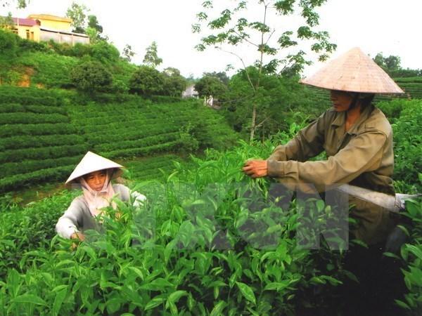 Les points forts de Thai Nguyen presentes aux entreprises americaines hinh anh 1