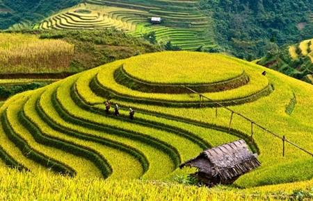 Yen Bai: deux semaines touristiques a la fois hinh anh 1