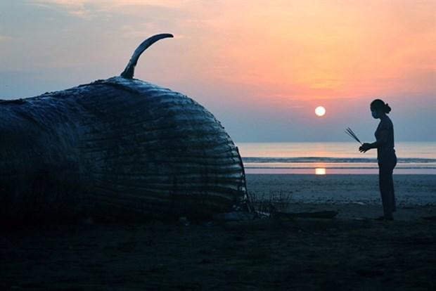 Un concours de photo capture la gloire de l'ocean hinh anh 1