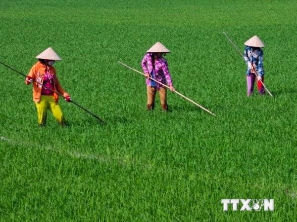 Agriculture: comment le Vietnam s'adapte-t-il au changement climatique? hinh anh 1