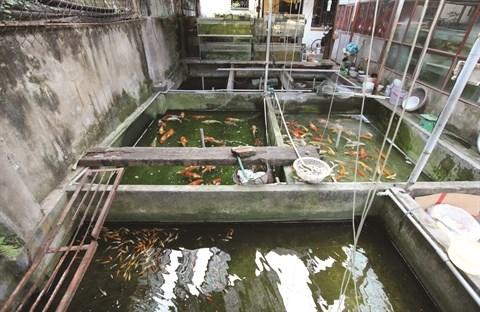 L'aquariophilie, une passion des Hanoiens hinh anh 5