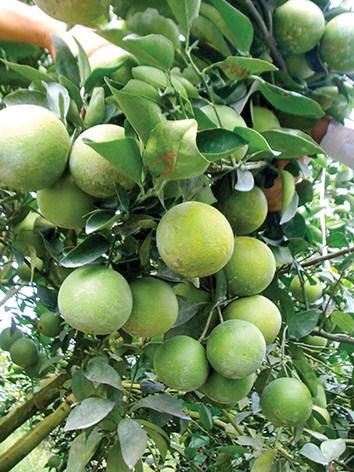 Dans la province de Hau Giang: Les fruits de la croissance hinh anh 2