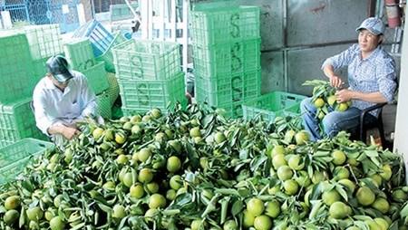 Dans la province de Hau Giang: Les fruits de la croissance hinh anh 1