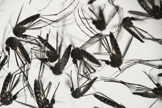 Zika : une bebe aurait ete atteinte de microcephalie Vietnam hinh anh 1