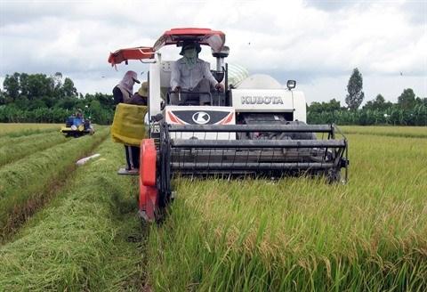 Developper de nouveaux debouches pour le riz vietnamien hinh anh 2