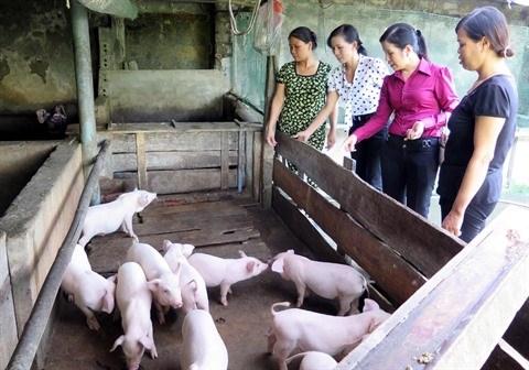 Les femmes, le moteur economique du Tay Bac hinh anh 1