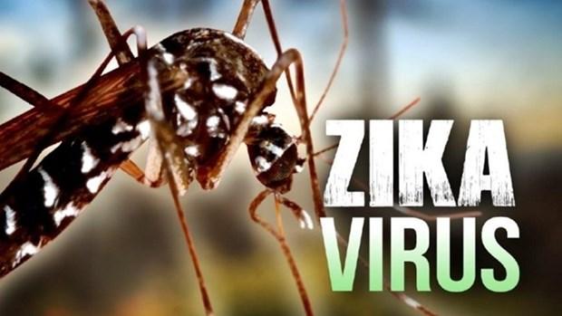 Ho Chi Minh-Ville: decouverte de 17 cas de virus Zika hinh anh 1