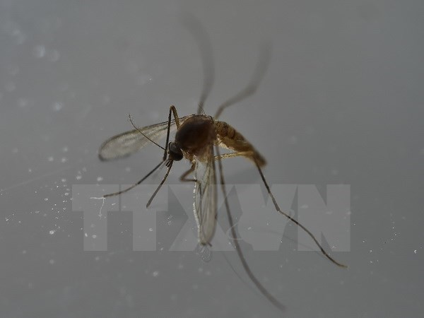 Ho Chi Minh-Ville : decouverte de 6 nouveaux cas de virus Zika hinh anh 1